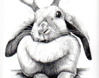 Jackalope 12 x 9 in. graphite drawing