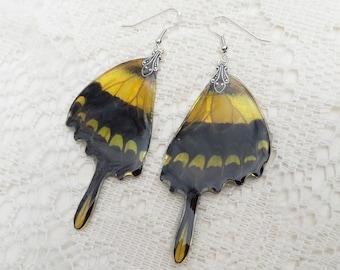 King Swallowtail Earrings - Real Butterfly Wing Jewelry - Iridescent Wings - Swallowtail Butterfly Wings -  Dandelion Dream