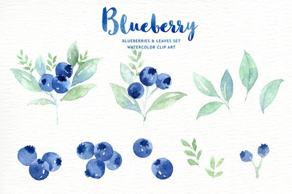 Blueberry Watercolor Clipart Wreath Branch Watercolor