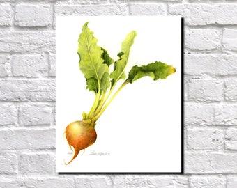 Vegetables, Botanical Print, Vintage Plant illustration,  Botanical Poster, Kitchen Decor, Book Plate  0375