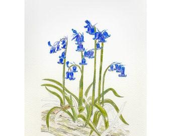 Bluebells - Irish Wildlife Collection, Giclee Print