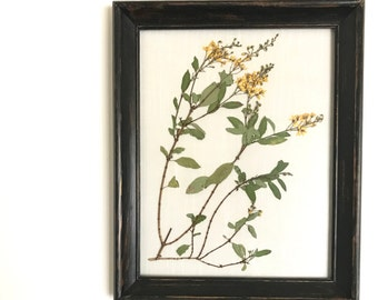 Framed Botanical Art. Real Hand Pressed Plant Framed. Pressed Botanicals. Stitched on Natural Linen