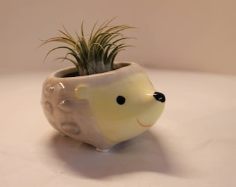 Hedgehog Air Plant Terrarium