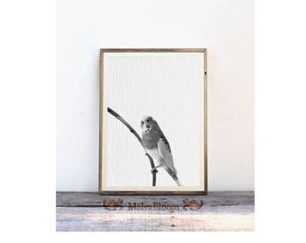 Wavy Parrot Black And White Photo Art, Parrot Peekaboo Print, Cute Wavy Parrot Large Poster, Baby Wavy Parrot Photography
