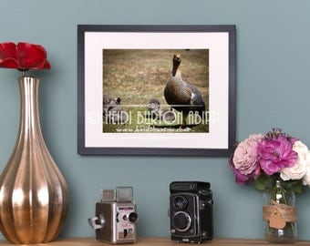 Photographic Art Print of Upland Goose mum and babies.  Unmounted colour wall art, landscape, poster print, choose your size.