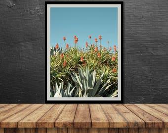 Tropical Vibe // Poster, Photography, Summer, Mood, Plants, Turquoise, Pastel, Print, Wall Decor, Home Decor, Studio, Unique, Haifa, Beach