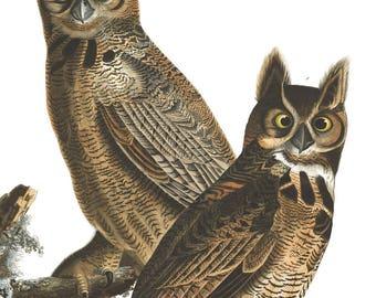 Owl Print - Audubon print - Great Horned Owl - Vintage Bird Illustration