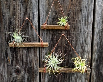 Set of Three Hanging Wood & Suede Air Plant Holders in Medium Brown with Four or Six Air Plants (Copper Nails Included)