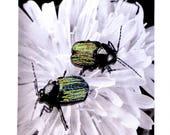 Entomojoly - mini décoration textile, entomologie, insecte brodé, piqué libre, cabinet de curiosités, illustration brodée