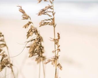 Beach Grass on Corolla