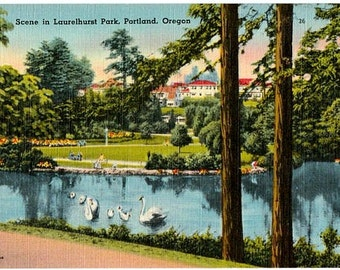 Vintage Oregon Postcard - Swans in the Lake at Laurelhurst Park, Portland (Unused)