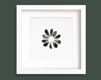Succulent leaves, Plant Print, Greenery, Gallery Wall Art, Botanical, Succulent Art Print, Minimalist, Nature Photography, Square Prints