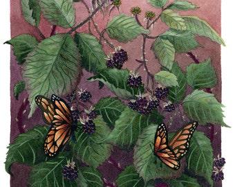 Fine Art Print of Original Watercolor Painting - Blackberries & Butterflies