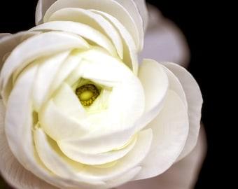 White Ranunculus, Botanical Print, Neutral Home Decor, Art Prints - Nature Photography, Flower Photograph, nursery walls, feminine wall art