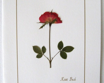 Pressed Flower - Rose Card, Pressed Rose On Blank White Greeting Card. All Occasion Stationery Note Card