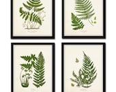 Vintage Fern Print Set No. 33, Giclee, Art, Collage, Botanical Art, Print Sets,Vintage Fern Prints, Illustration, Botanical Prints, Woodland