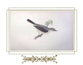 """Digital Download of Our Original Victorian French Mat design with F.O. Morris Antique bird print c.a. 1890""""s"""