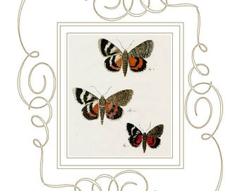 Digital Download of Our Original Victorian French Mat design with Antique Butterfly print ca. 1790's