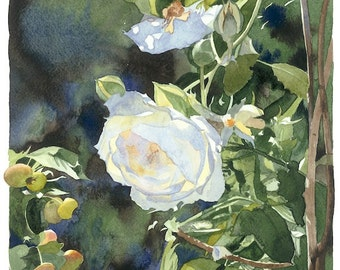 The Rose and Crabapple, Watercolour Giclée print
