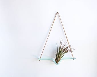 Medium - Clear Glass Airplant Swing with Leather Cord for Hanging - plant wall hanging