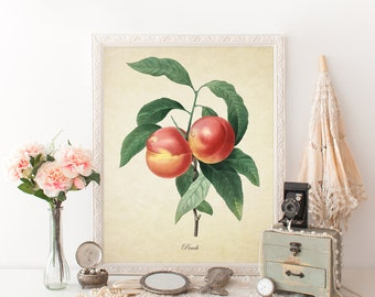 Peach Botanical Print, Peach Botanical Art Print, Home Decor, Natural History Botanical, Peach Print, Peach Decorative Reproduction VF014