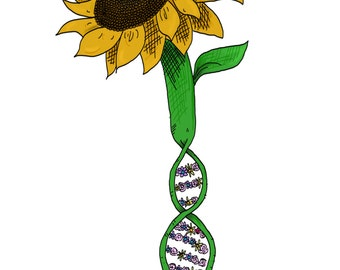 Sunflower DNA Print