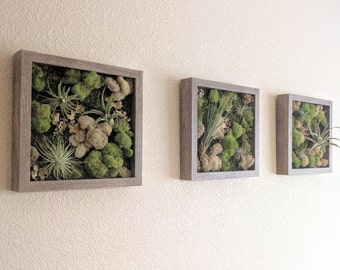 Air Plant Vertical Wall Garden with Air Plants (Tillandsia), Reindeer Moss and Lichen - Set of Three