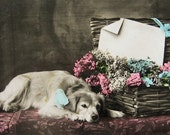 RESERVED for CB, Antique dog photo postcard, Antique French dog photo postcard - please do not buy unless you're CB