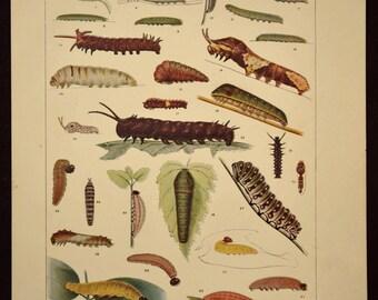 Caterpillar Print Caterpillar Wall Art Decor Caterpillars