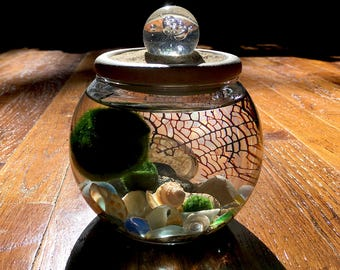 Zen Marimo Moss and Crystal BUBBLE Ball Sphere in Stone Top Unique Mini Aquarium / Terrarium