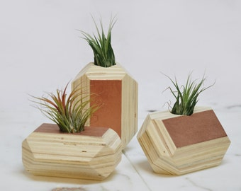 Geometric Air Planter Vase //  Rose Gold  // Geometric Air Plant Planter Holder Vase // PLANT INCLUDED // // FREE Shipping