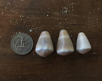 Surf tumbled cone shells, lot of 3