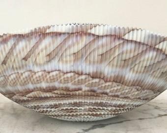 Vintage Italian Murano Nautilus Shell