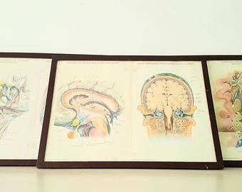 Brain Anatomy pictures lot years 60 / 60s brain anatomy pictures lot