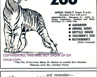 Ready-To-Frame Reproduction of a 1957 London Zoo & Whipsnade Zoological Park Advert / Ad Taken From a Madame Tussaud's. Free UK Delivery