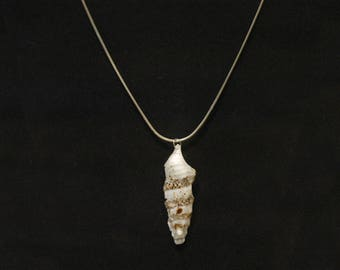 Brown and White Auger Shell (w/o chain)  051