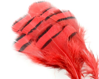 3.5 Inch Red Lady Amherst Feathers (10) Red Feathers. Red Pheasant Feathers for Hat Bands. Red Bird Feather for Masks. Short Feather.