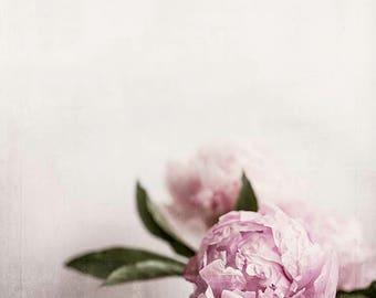 Peony Photograph, Peony Art, Square Print, Printable peony Art, Large Flower Print, Flower Photography, Vintage Peony Art, Pink Flower