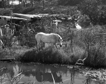 Horse in Comporta- digital file