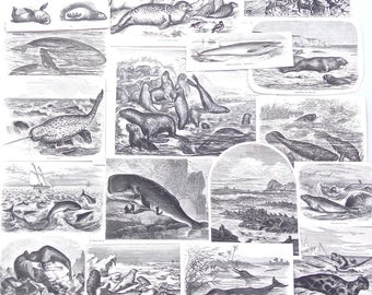 Antique Paper Ephemera Pack of Sea Mammals 1890s -Art Journal Supply, Junk Journal Supplies, Collage, Victorian Natural History, Whale, Seal