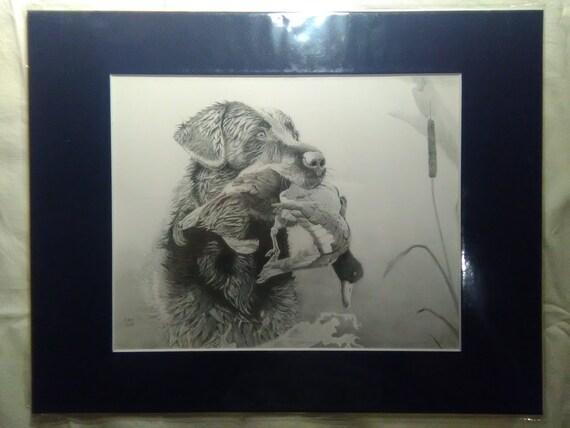 Black Lab Bird Hunting Print Of Original Pencil Drawing