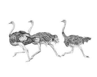 Ostrich Print | Ostrich Wall Art | Bird Prints | Safari Nursery Art | Safari Wall Decor | Black and White Nursery Art | Safari Art Print