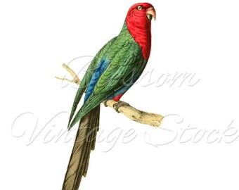 Tropical Bird Print, Parrot Art Print, Clipart, Instant Download, Antique Illustration for print, Digital artwork  INSTANT DOWNLOAD 2260