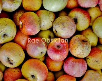 Apples for Apples--Photography--Wall Art--Decor