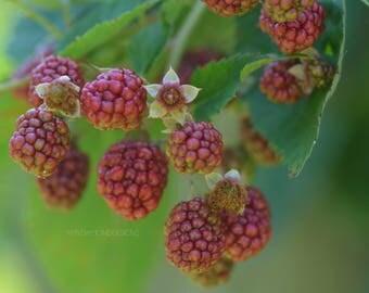 Raspberry Print, Raspberries, Fruid Decor, Macro Photography, Kitchen Art, Kitchen Poster, Fruit Photography, Fruit Decor, Kitchen Wall Art