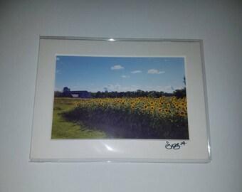 Sunflower Summers Day - 4x6 Matted Print - Alburgh Vermont 2014