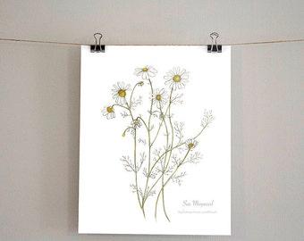 Sea Mayweed, Botanical Wildflower Watercolour, Art Print