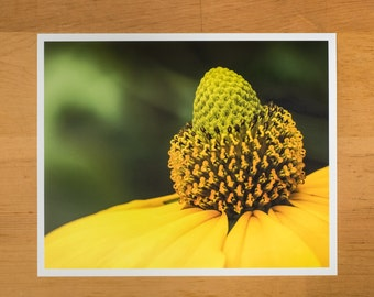 Photo Print of Yellow Coneflower by DebSladekPhotography