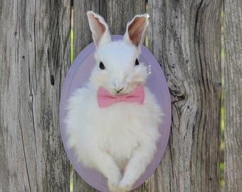 Lovely White Rabbit Taxidermy Mount with Bow Tie