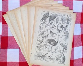 10 French dictionary pages old book pages paper ephemera Birds